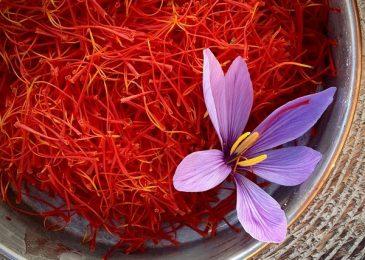 Review đầy đủ về saffron – Nhụy hoa nghệ tây